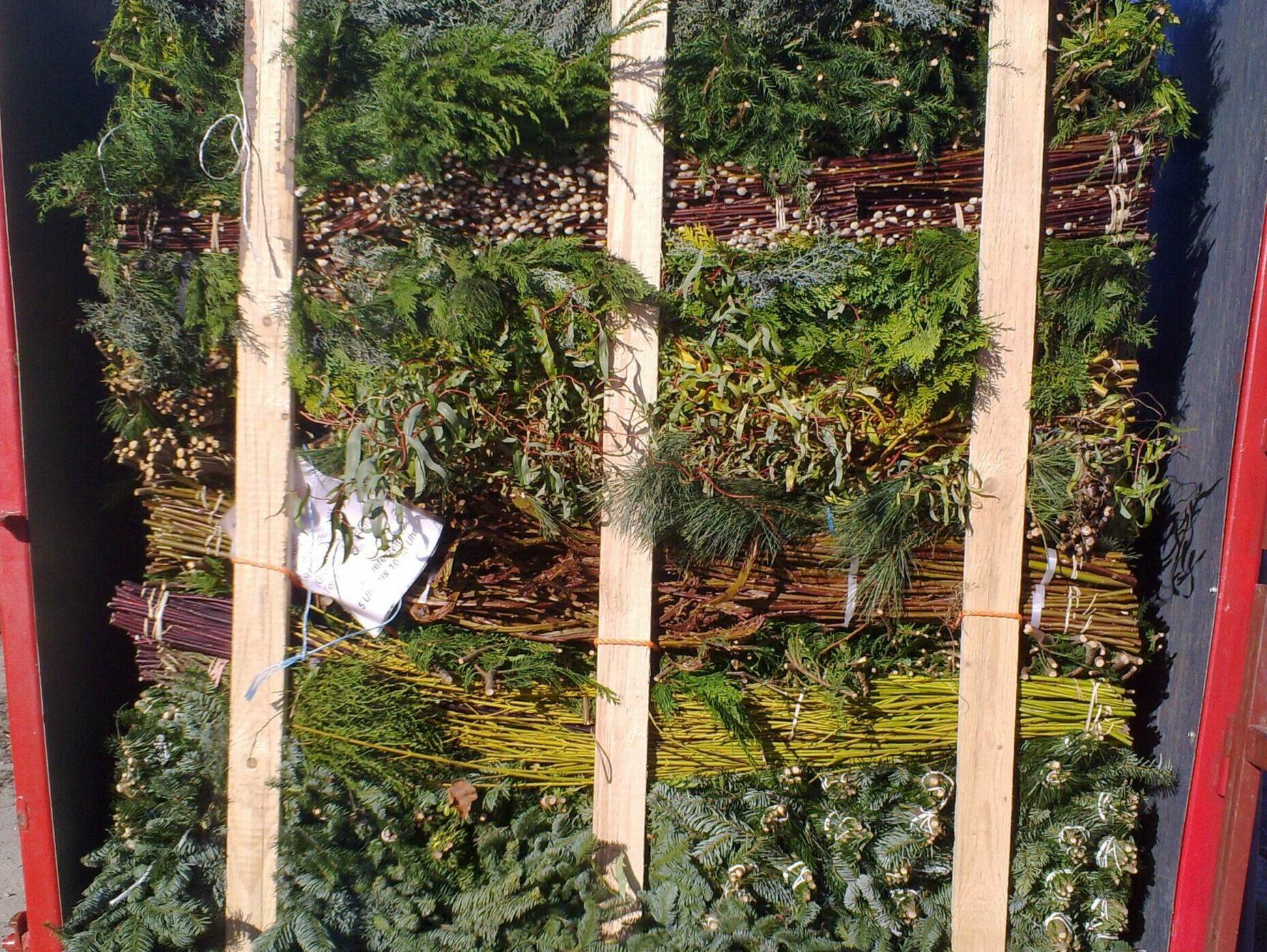 Gebinde Schnittgrün für Floristikbranche
