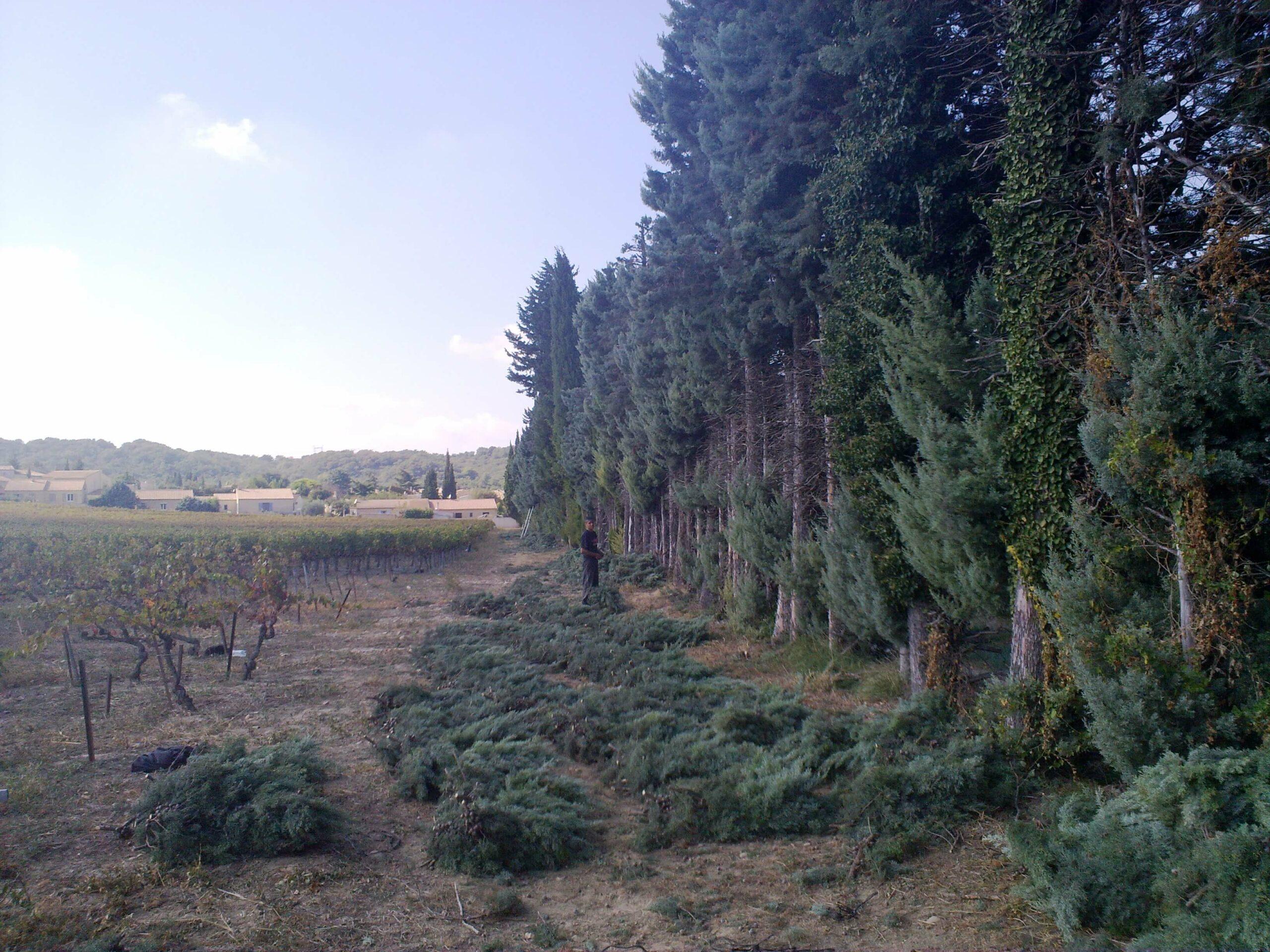 SCHACHT FRANCE Schnittgrünproduktion in Südfrankreich