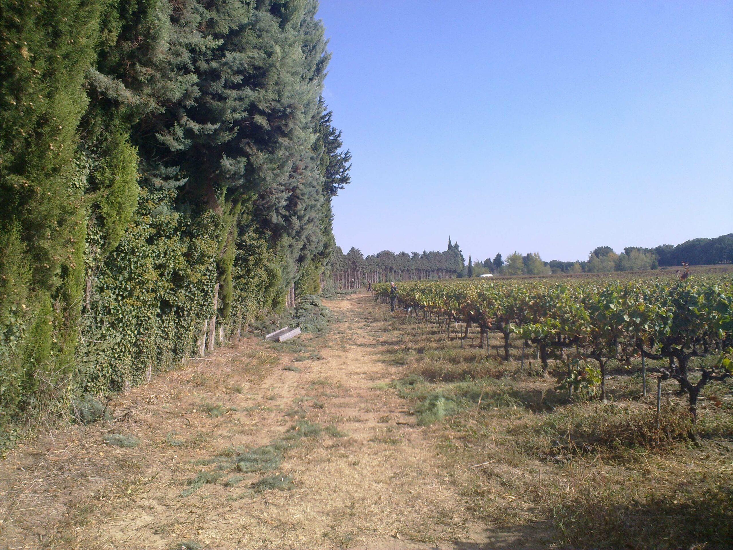 Schnittgrünproduktion Südfrankreich Schacht France