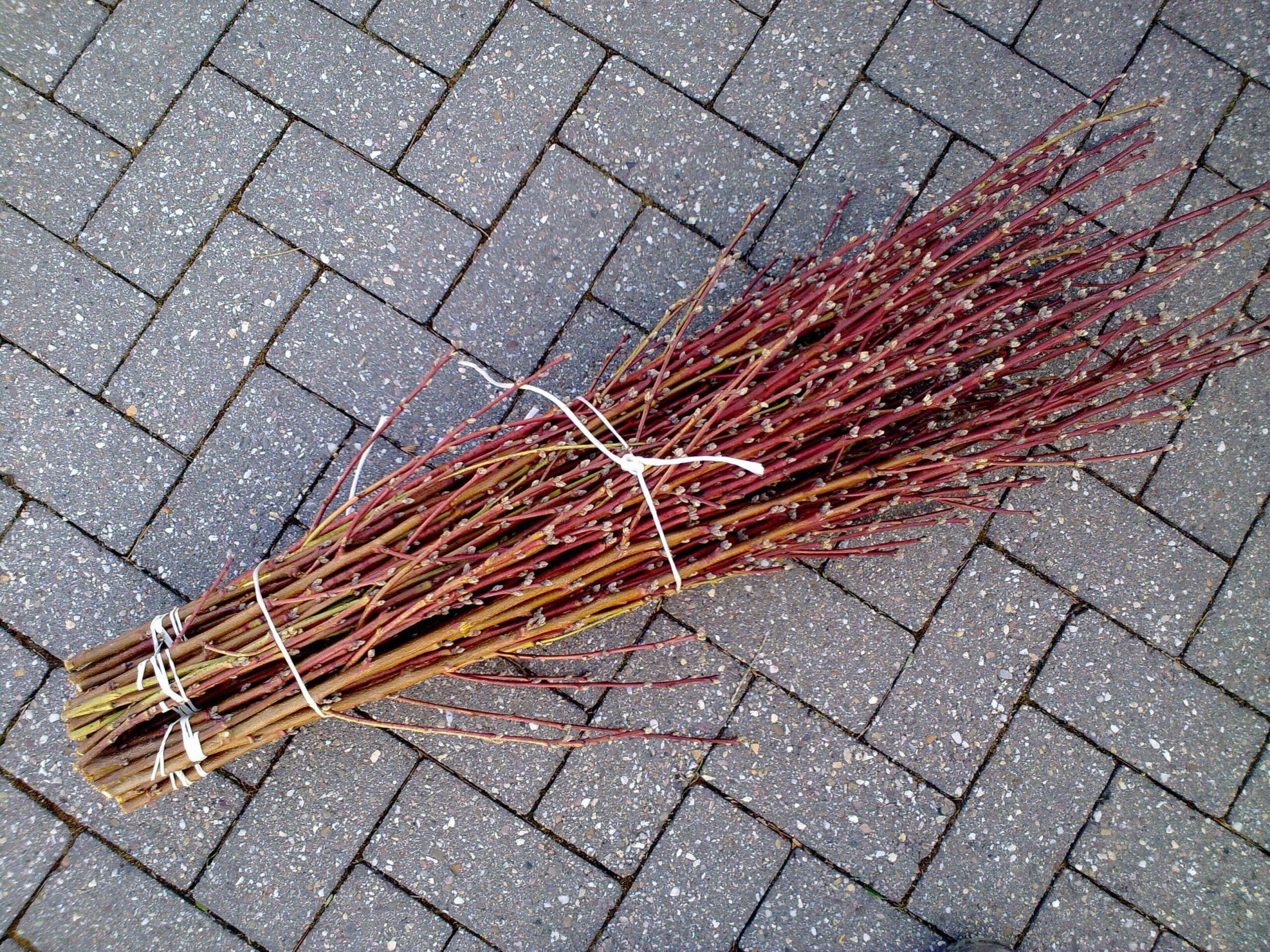 Schacht France Schnittgrün Produktion Pfirsichzweige Prunus Persica Handbund